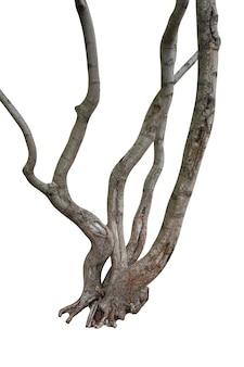 흰색 배경에 고립 된 나무 줄기입니다. 고품질 사진
