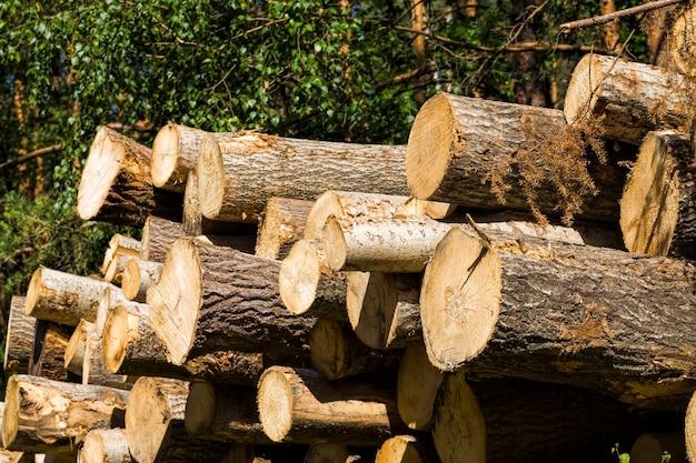 自然の木の幹