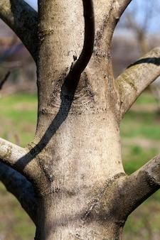 Детали ствола дерева с корой для защиты
