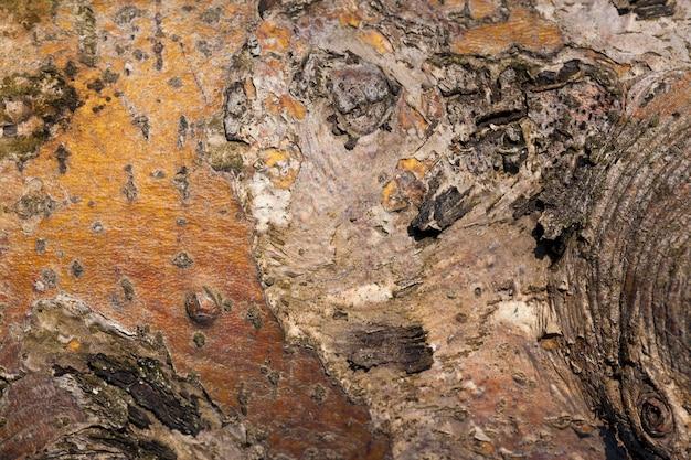 保護のための樹皮を持つ木の幹の部分