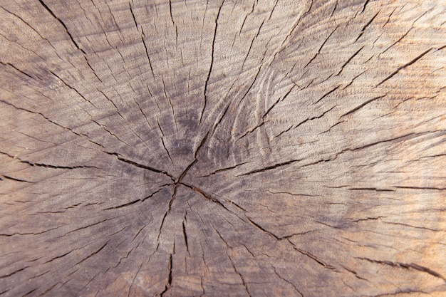 Tree trunk stump texture background top view.