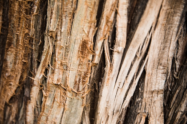 클로즈업에서 나무 줄기 텍스처
