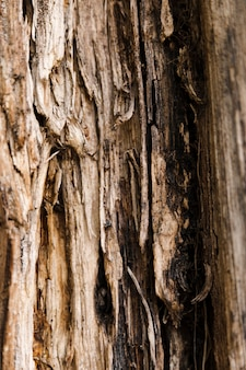 Tree trunk texture close up