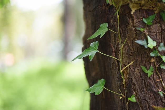 つる植物が成長している木の幹