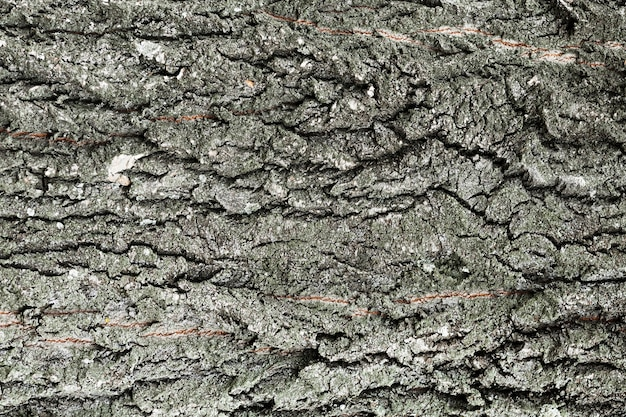 Tree trunk wood background in grey shades