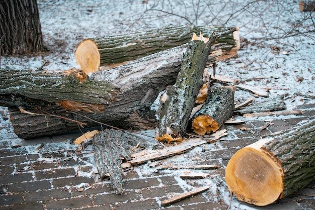 나무 줄기는 자르고 땅에 던져졌습니다. 산업. 환경