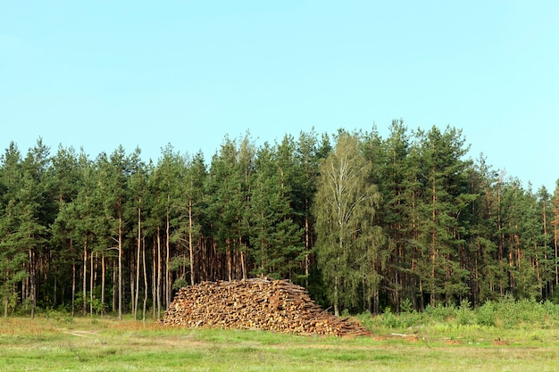 Tree trunks stacked together during harvesting. photo during the summer, forest and blue sky in the background