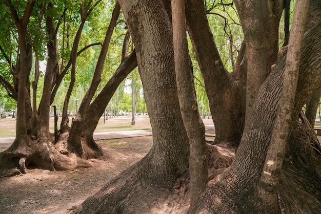 公園に大きな根を持つ木の幹
