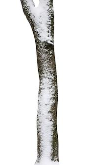 白い背景で隔離雪と木の幹