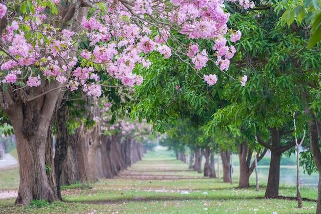 樹木のトンネル、ピンクの花木のロマンチックなトンネル