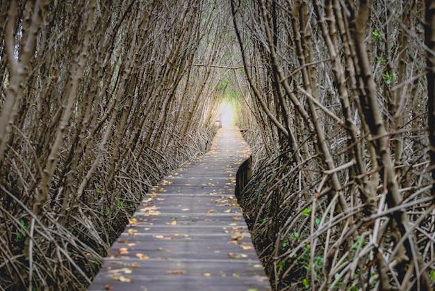 Tree tunnel, wooden bridge in mangrove forest