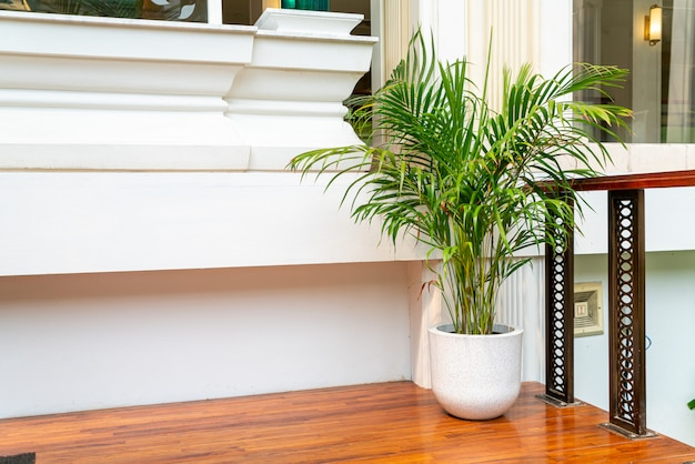 Tree in vase for home and building decoration