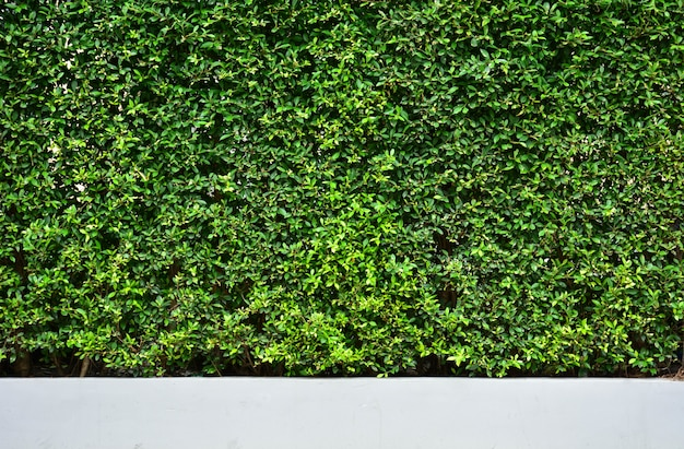 Tree wall on beside the road. vertical garden wall