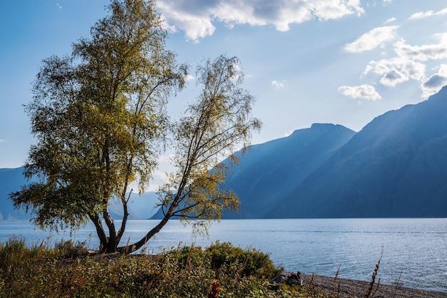 山の湖の岸に紅葉のある木ロシアアルタイ湖テレツコイェ