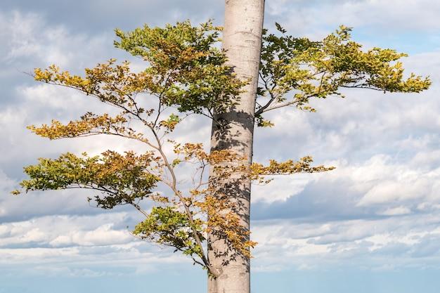 昼間の枝と緑の葉を持つ木