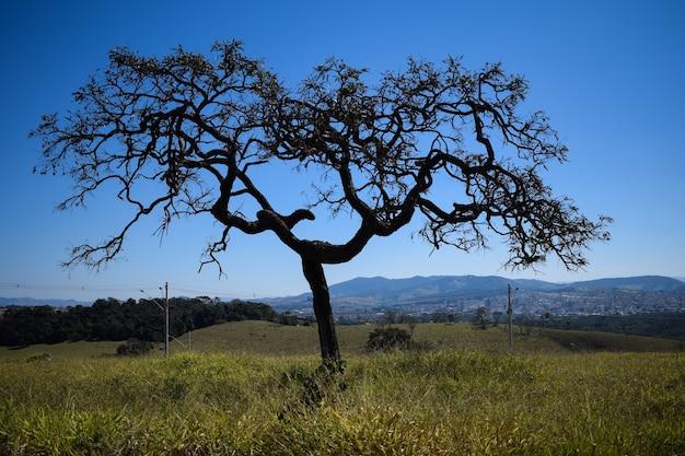 푸른 하늘이 있는 들판에 비뚤어진 나뭇가지가 있는 나무