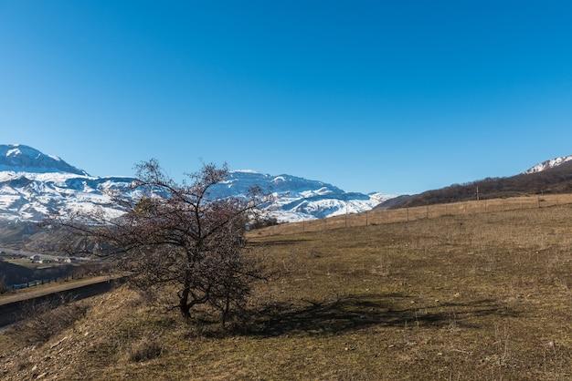 Дерево с опавшими листьями в предгорьях