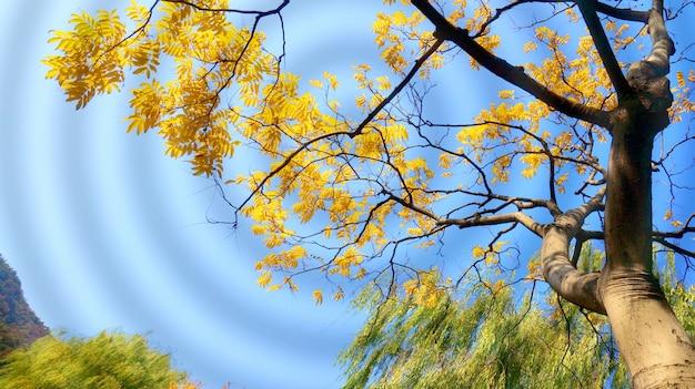 Дерево с золотыми листьями