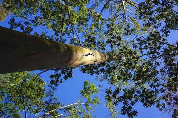 青い空とジャングルの真ん中に高い幹を持つ木