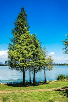 Tree with lake.