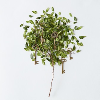 흰색 배경에 격리된 다른 문에서 잠금을 위한 나뭇잎과 황금 열쇠가 있는 나무. 식물 개념입니다.