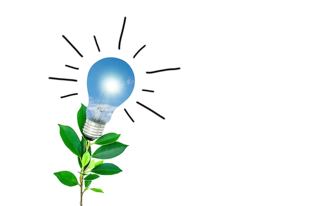 Tree with light bulbs on a white background energy saving concept