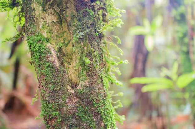 Tree with moss on bark in a green forest or moss on tree trunk