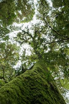 熱帯雨林の苔の木。