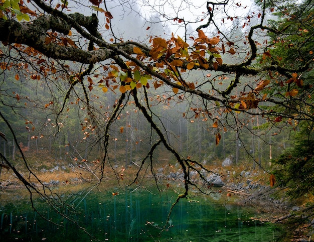オレンジの葉とアイプゼーのツークシュピッツェ湖の木