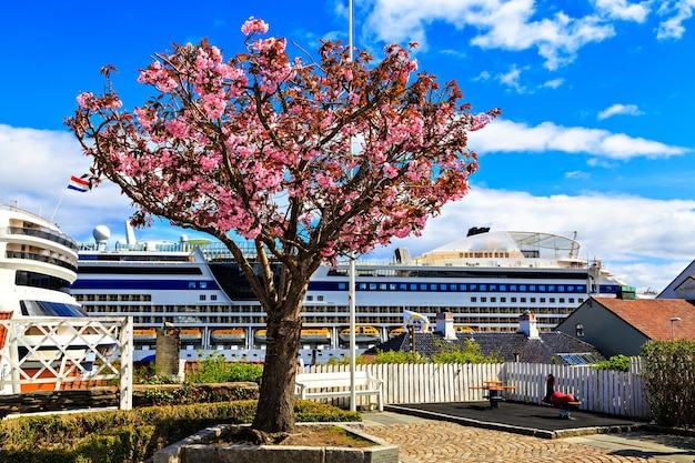 The tree with pink flowers on ship's