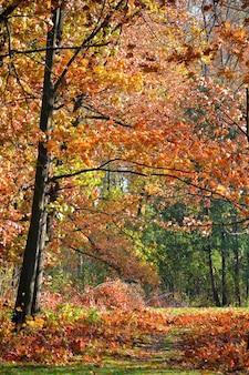 Дерево с красными листьями и черными стволами в осеннем парке