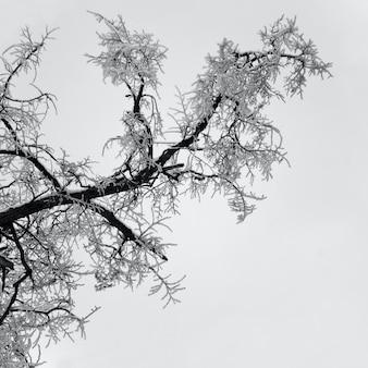 冬には雪の木