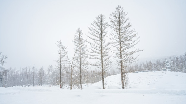 Tree with winter landscape