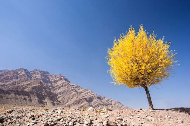 Tree with yellow leaves in autumn season