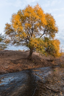 Tree with yellow leaves by the creek