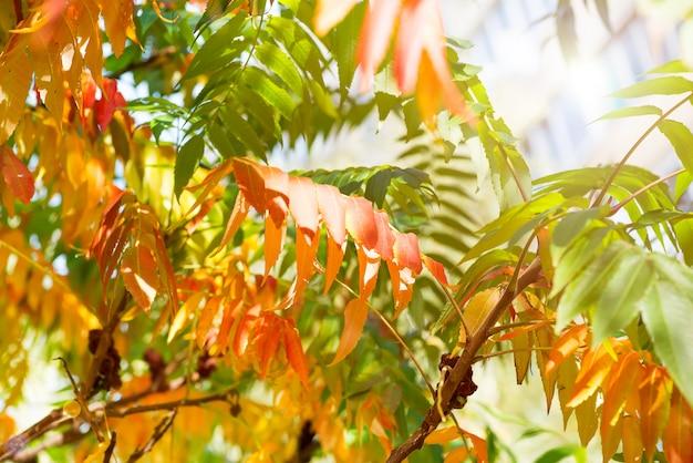 秋、自然な背景の黄色、赤、緑の葉の木