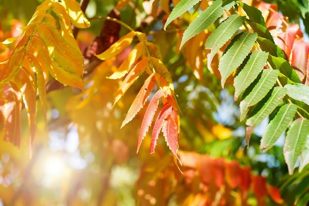 秋に黄色、赤、緑の葉の木