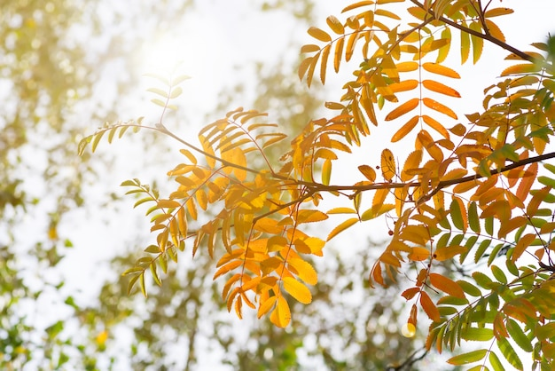 Tree with yellow, red and green leaves in autumn