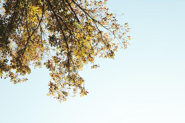 青い空を背景に黄ばんだ葉を持つ木、テキストのためのスペース