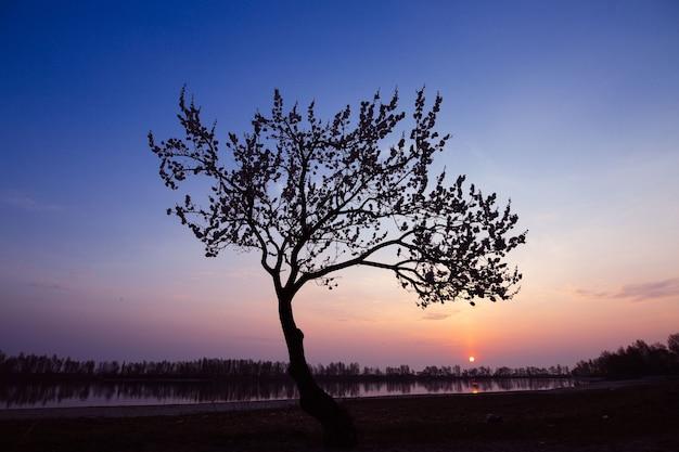 日没のない木