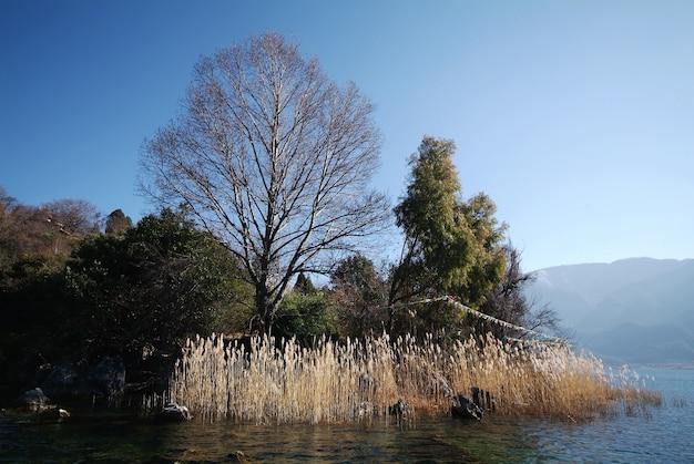 녹색 숲에서 잎없는 나무
