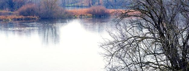 Дерево без листьев у реки осенью. поздняя осень Premium Фотографии
