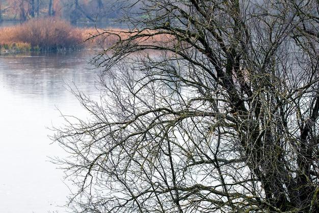 秋の川の近くの葉のない木。晩秋