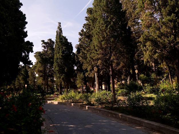 Treed roadway in rhodes greece