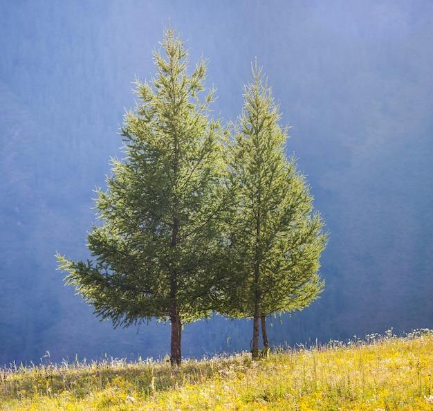 山の斜面を背景に木々
