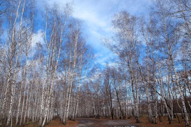 구름 가을과 푸른 하늘에 나무