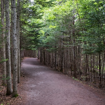 Trees along road in forest, hopewell rocks, bay of fundy, new brunswick, canada