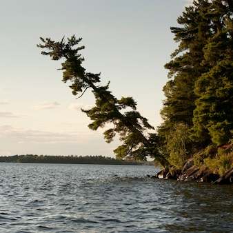 Trees along shoreline at lake of the woods, ontario