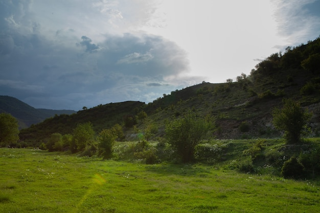 春の夕方の木々と丘