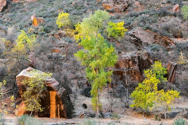 ザイオン国立公園の木々と岩